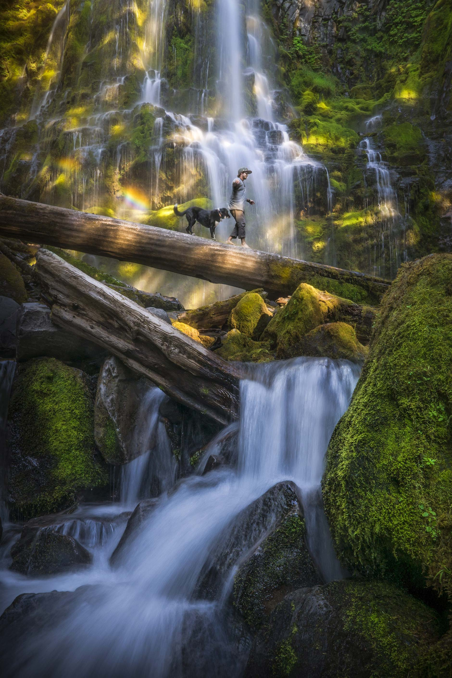 Landscape photography of a boy and his dog on a log at Proxy Falls, Oregon