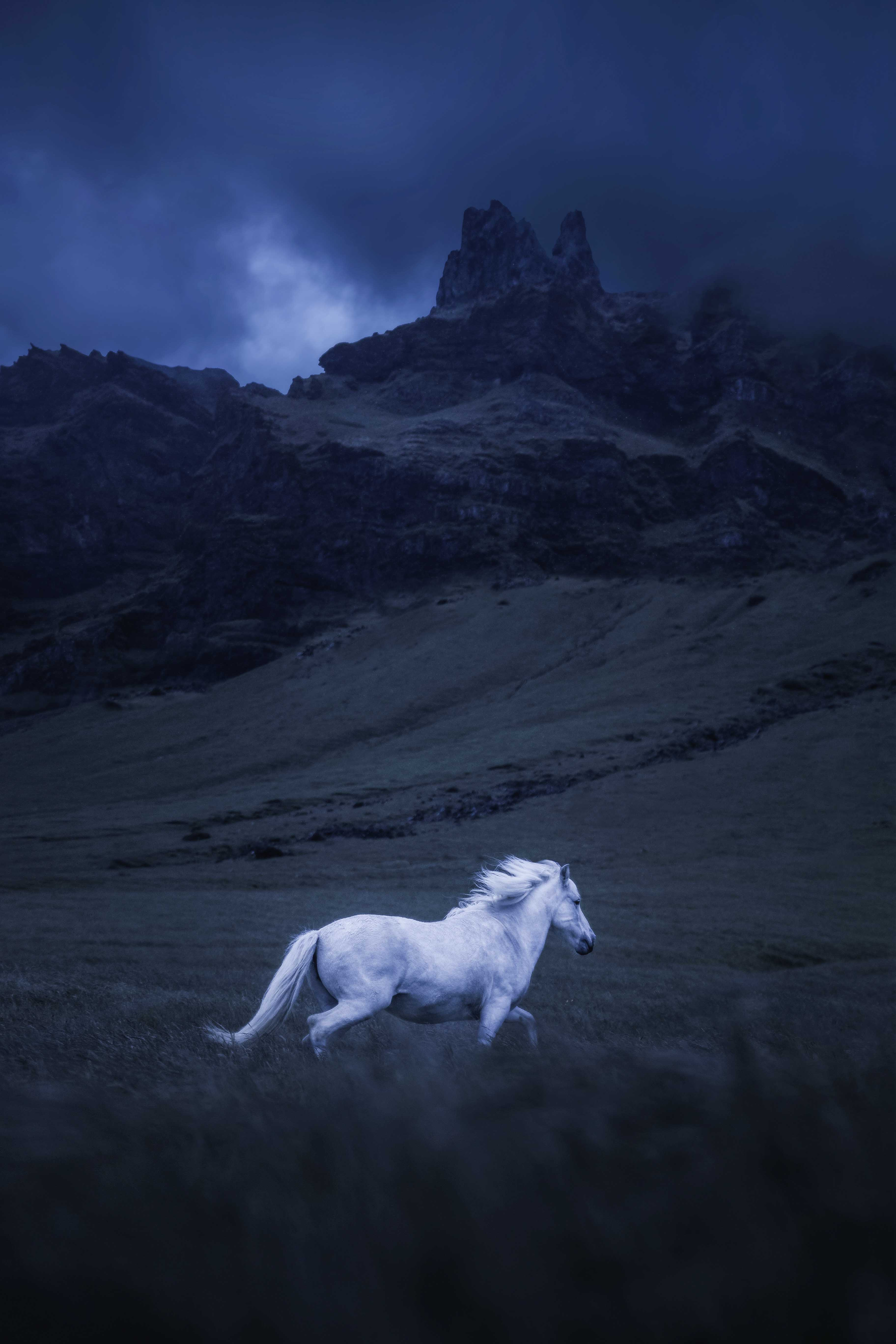 Wildlife photography of a white horse running through a field in Iceland Photo by Andrew Studer